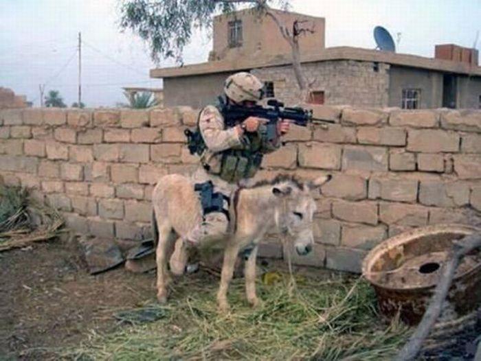 Military Humor (16 pics)