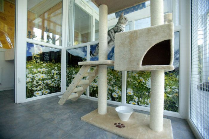 Luxury Hotel for Cats (29 pics)