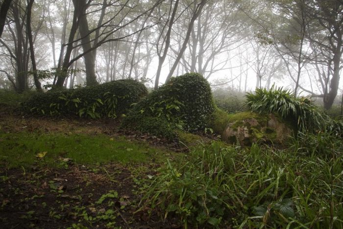 The Lost Gardens of Heligan (39 pics)