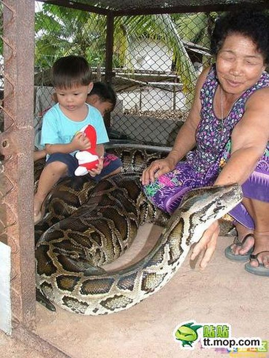 Playing with a Large Snake (8 pics)