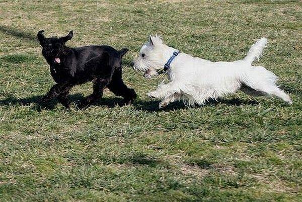 Running Dogs (36 pics)