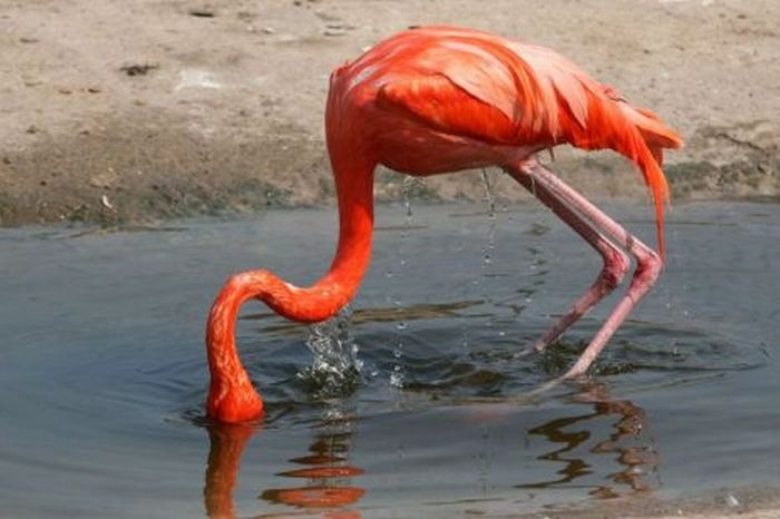 Flamingo Fail (2 pics)