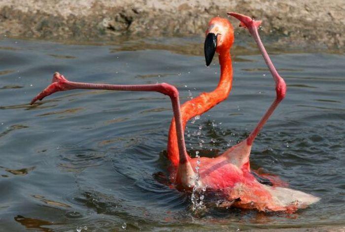 Flamingo Fail (2 pics)