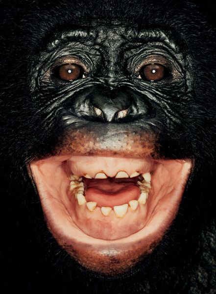 Portraits of Apes (8 pics)