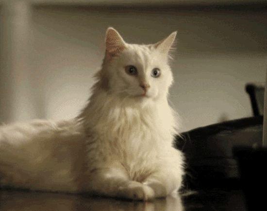 Cat GIFs (11 gifs)