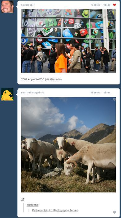 Funny Tumblr Dashboard Coincidences (49 pics)