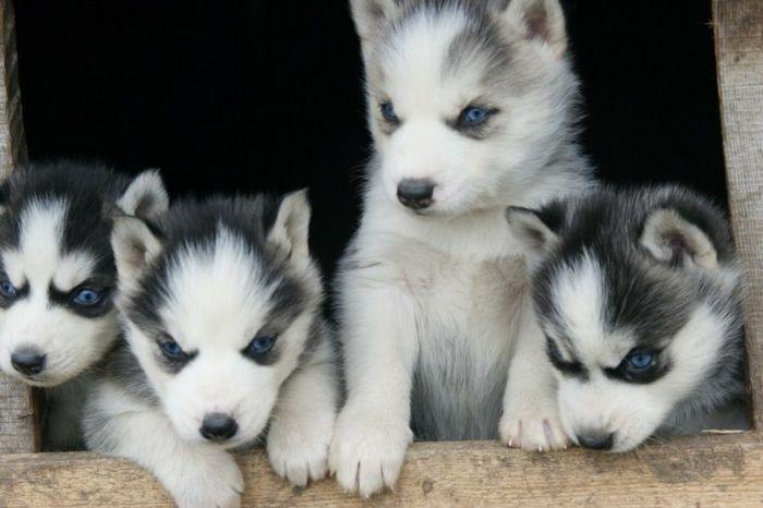 Rare Pets (68 pics)