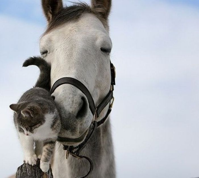 The Cutest Animal Friendship (62 pics)