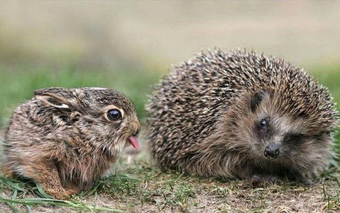 The Cutest Animal Friendship (62 pics)