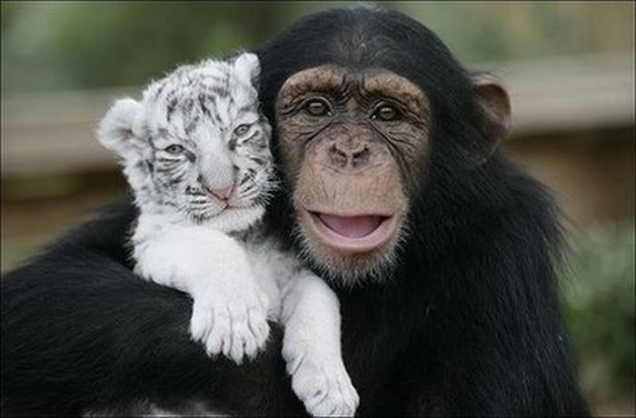 """Képtalálat a következőre: """"animal friendship"""""""