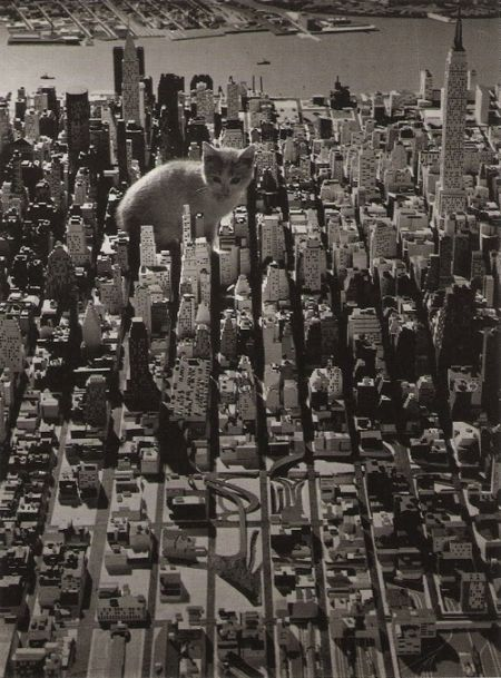 The World Will End With Catzilla Atack (25 pics)
