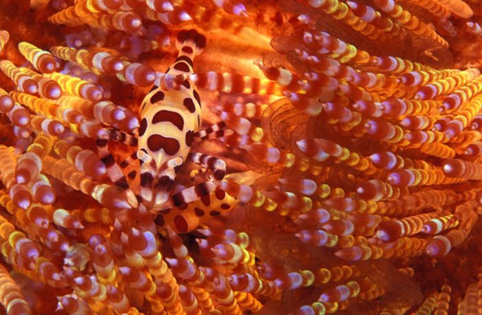 Colorful Underwater Masters of Disguise (17 pics)