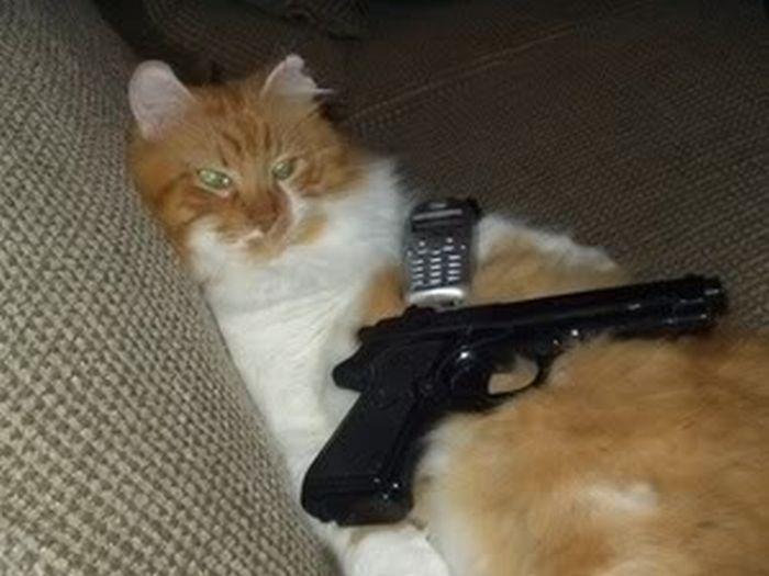 Dangerous Home Pets (54 pics)
