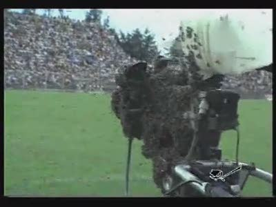 Bees Hate Soccer