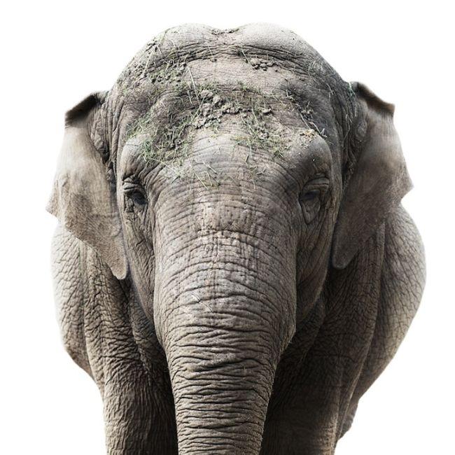 Animal Portraits (11 pics)