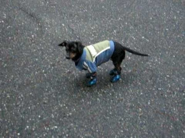 Pets Wearing Weird Shoes (20 pics)