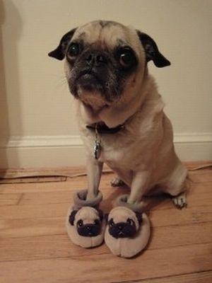 Pets Wearing Weird Shoes (20 pics)