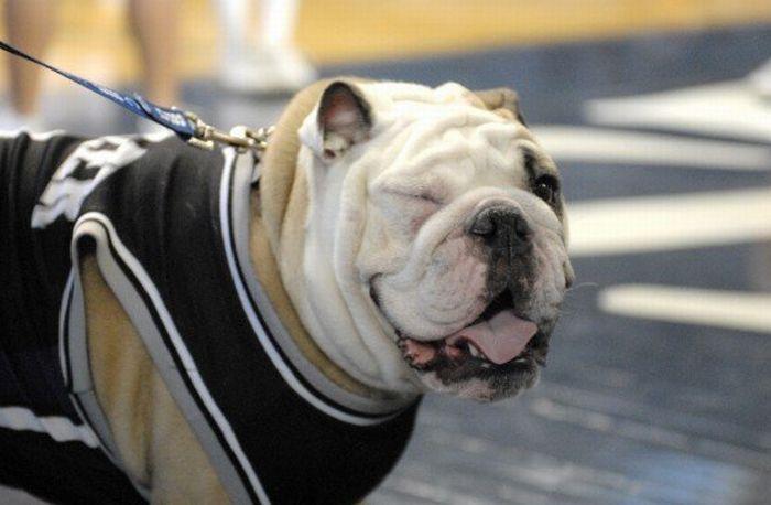 Charming University Mascot (30 pics)