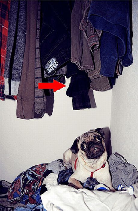 Tom Ford's 22 Essentials by Pugs (23 pics)