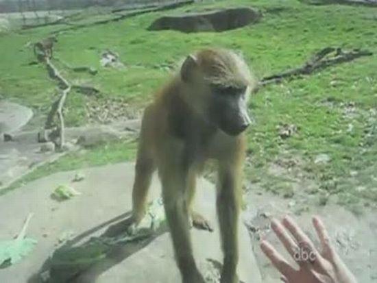 Rude Monkey