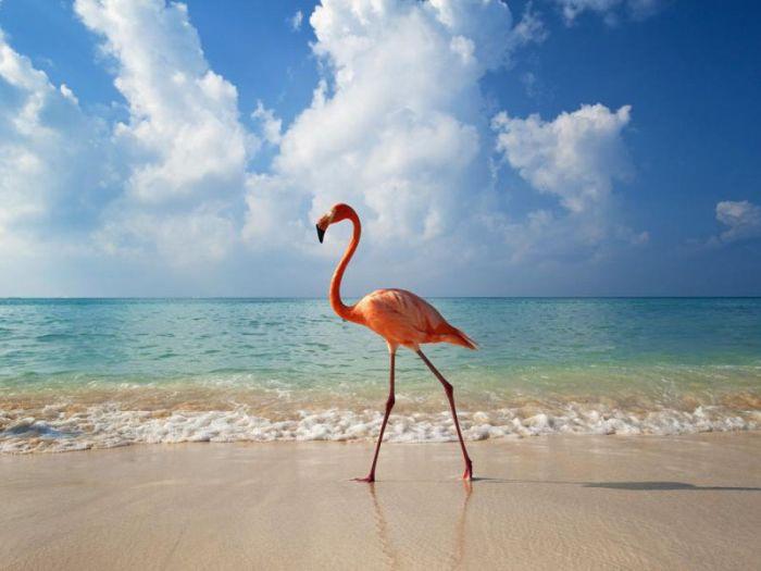 Muchas fotos hermosas de animales