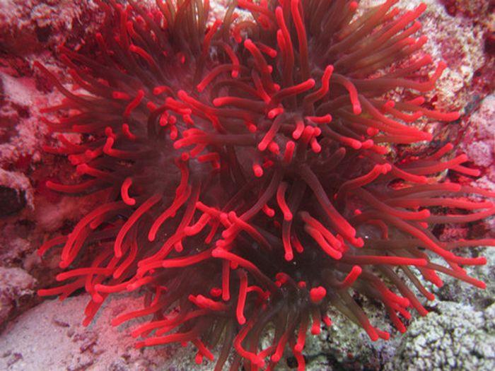 algunas fotos de corales