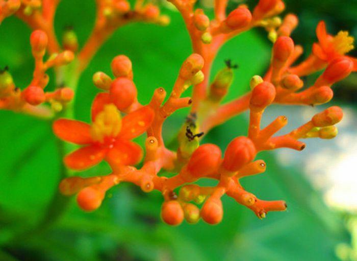 Inspiring Coral Photography (35 pics)