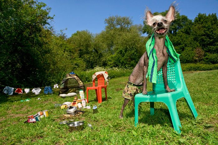 Funny Dog's Life (10 pics)