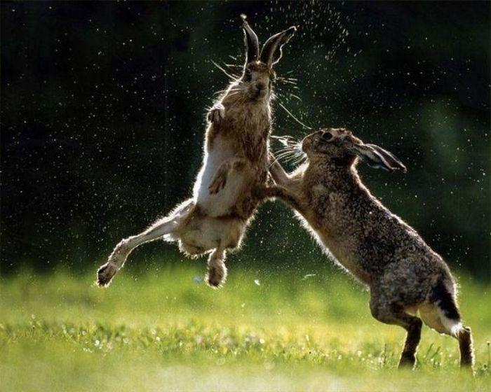 muchas fotos de animales: