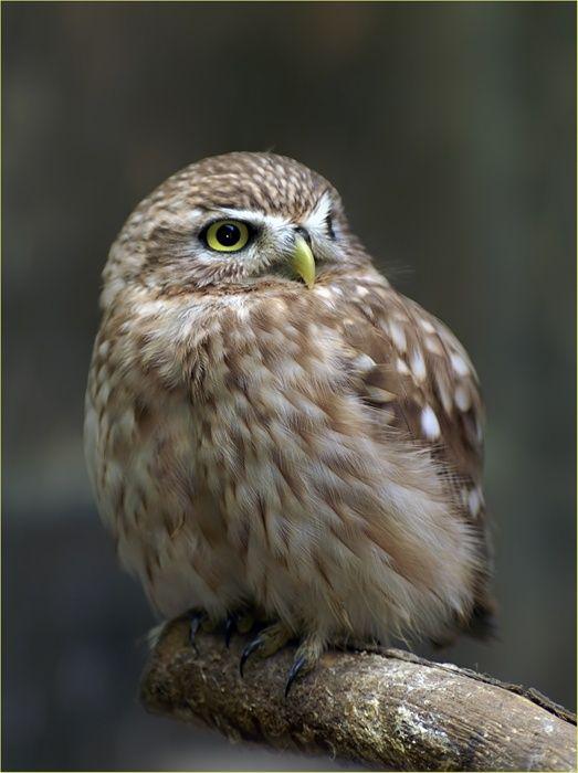 Bird Photography (100 pics)