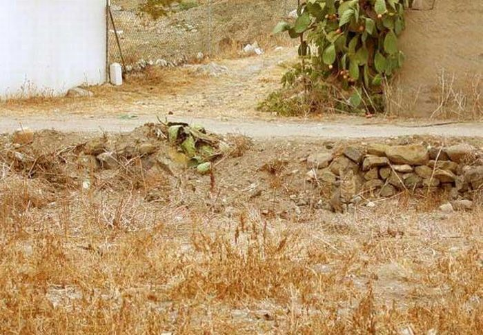 Invisible Cat. Can You Find It? (5 pics)