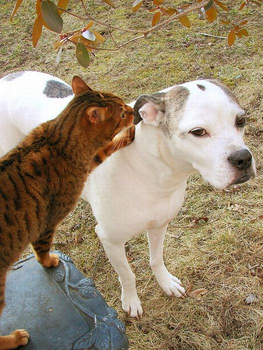 Funny Cats and Dogs Whispering in Ear (16 pics)