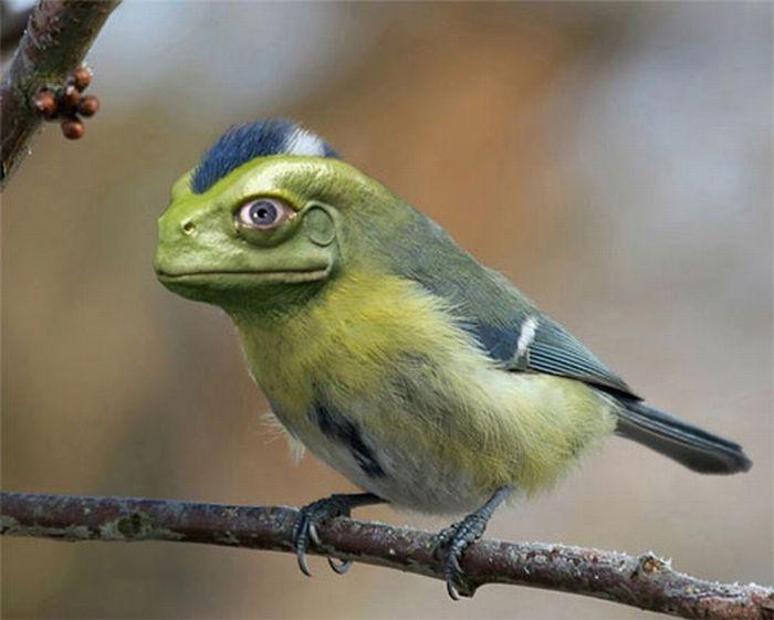 Hilarious Animal Manipulations (30 pics)