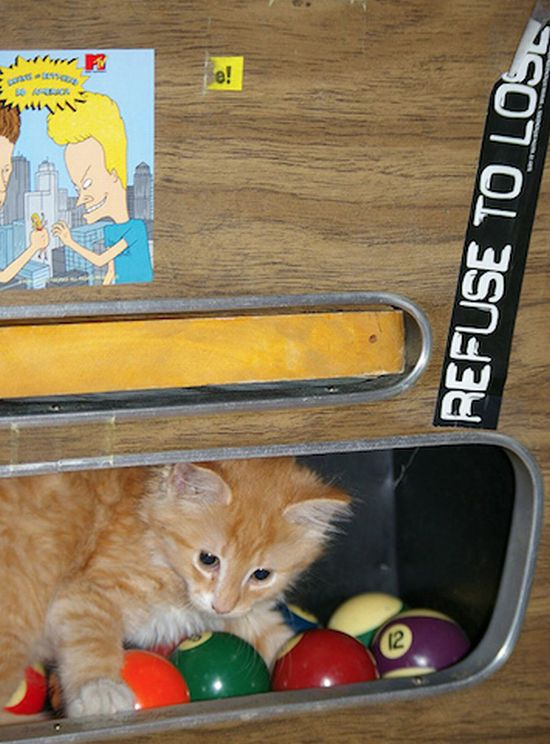 Cute Cats In Pool Tables (15 pics)