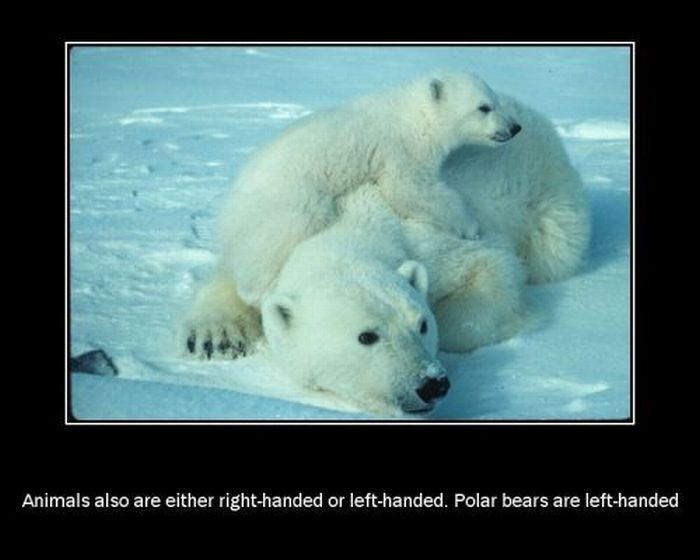Interesting Facts About Animals (13 pics)