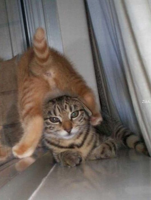 Funny Poses of Chillin' Cats (47 pics)