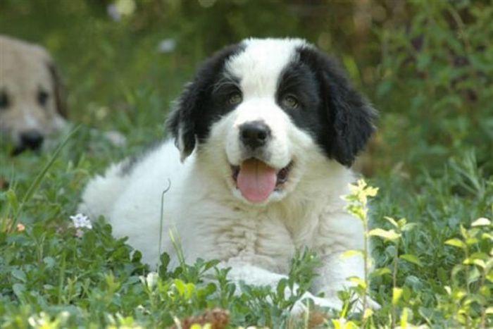 Perros y cachorros de razas diferentes
