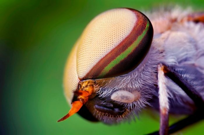 Amazing Photos of Insects (142 pics)