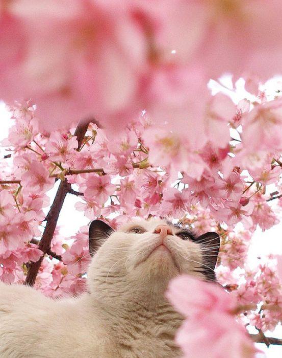 Cherry Blossom Tree Cats (20 pics)
