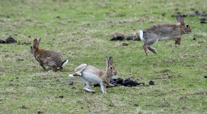 Jumping Bunnies (21 pics)
