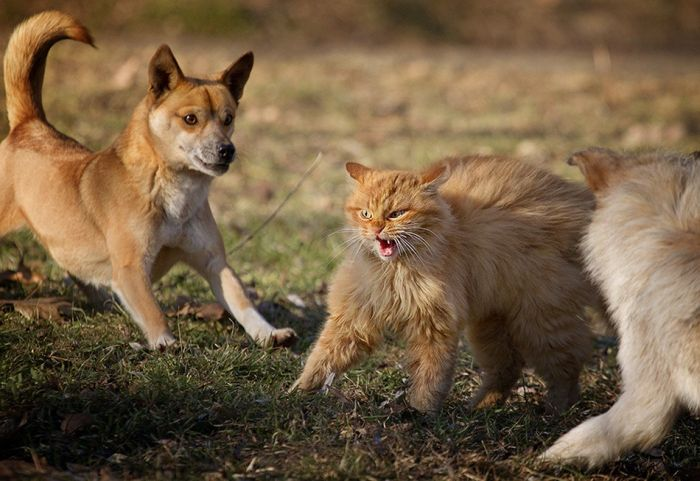 Brave Cat (6 pics)