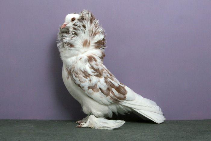 Cool Pigeons (18 pics)