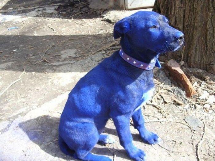 Blue Puppy (7 pics)