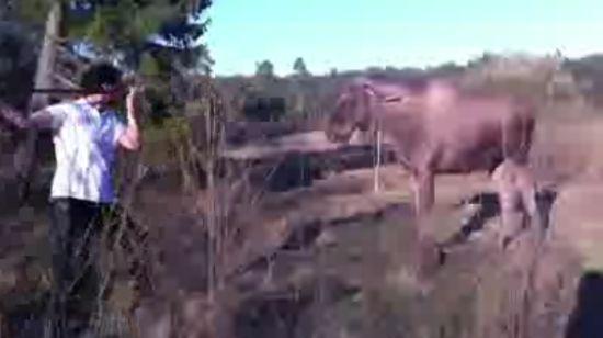 Man vs Moose