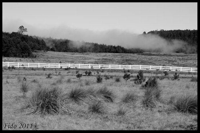 Fog (39 pics)