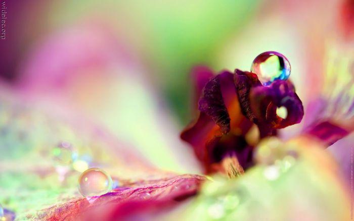 Macro Photography (100 pics)