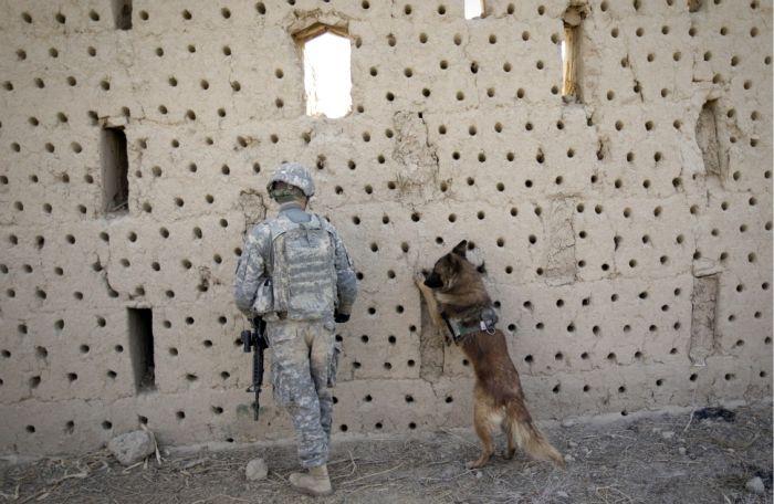 War Dog (10 pics)