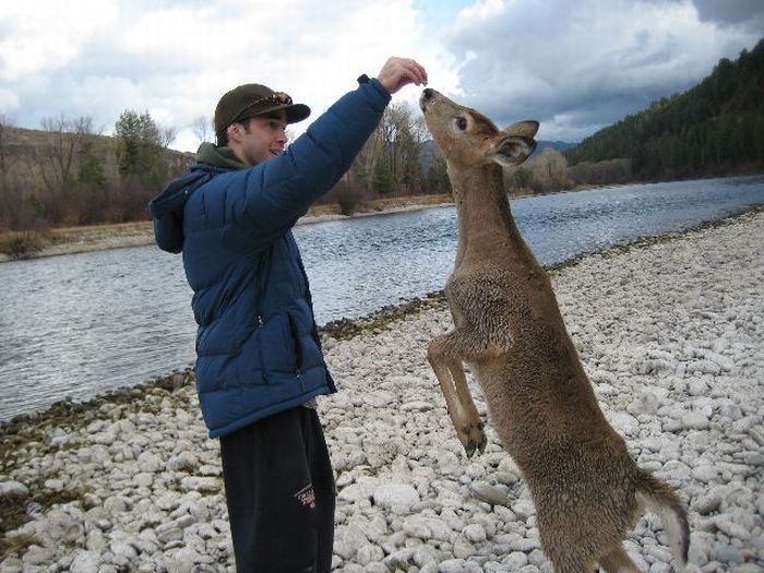 Friendly Little Deer (5 pics)