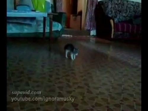 Scared Kitten vs Ball