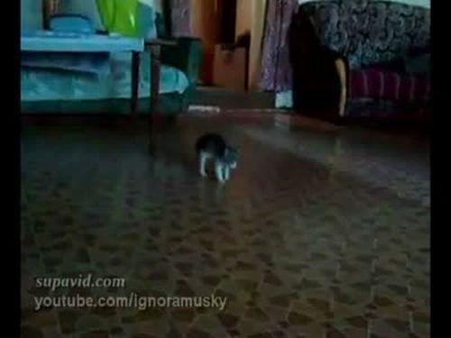 Scared Kitten vs Ball